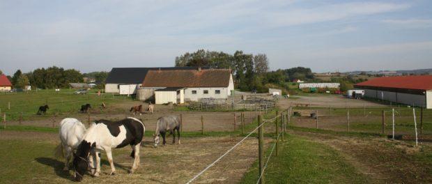 Drömmen är att gården ska bli en mötesplats för ungdomar.