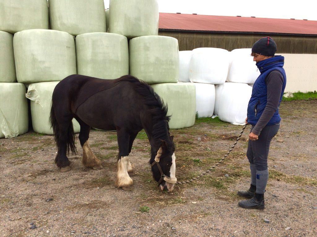 Jennie Rosewall med hästen Winny.