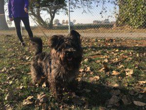 Hunden Ingo inviger den nya rastplatsen