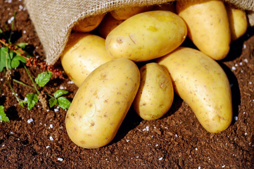 2008 blev potatisens år för att FN ville belysa rotfruktens roll i att minska hungersnöd