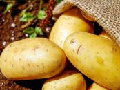 close-up-harvest-potatoes-162673