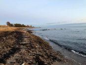 Ebba Fagerberg Drameus började själv plocka skräp under promenader längs med stranden i Abbekås. Nu hoppas hon att fler ska engagera sig. Foto: Abbekås Trädgårdsförening