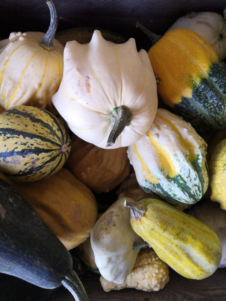 Klassiska orangea halloween-pumpor kan man äta men de mindre prydnadspumporna smakar bittert.