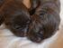 Valpar behöver vara hos sin mamma 8-10 veckor innan de kan flytta till sina nya ägare.
