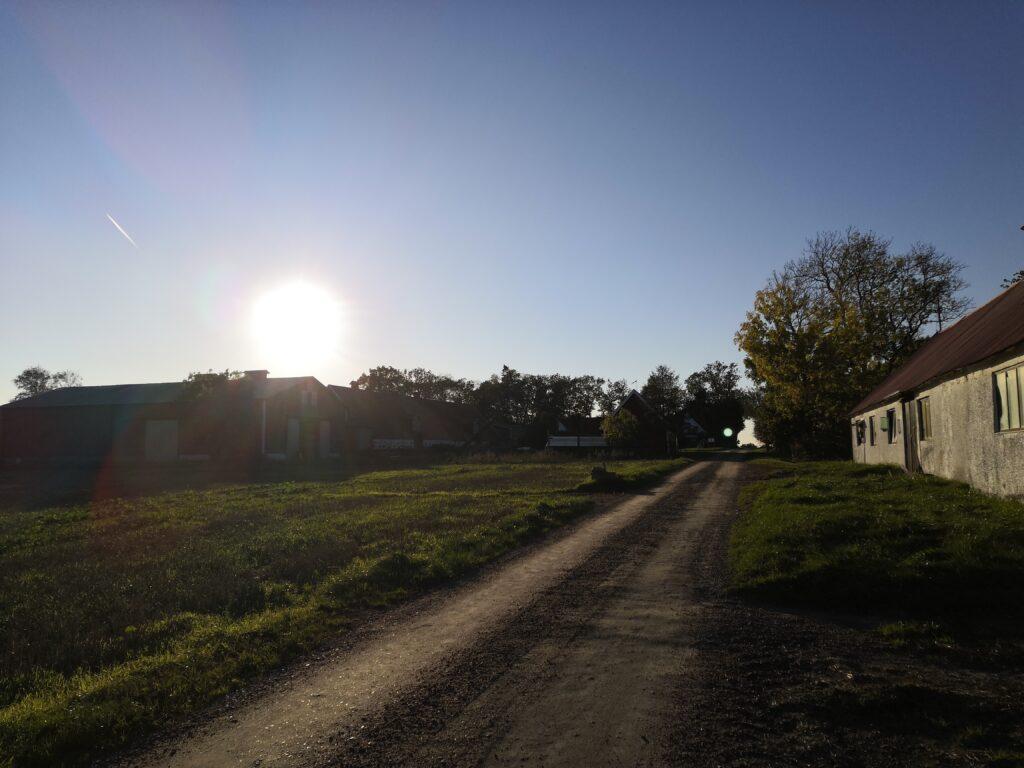 Mats Persson odlar pumpor på den gård han tog över efter sin far.
