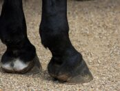 horses-hooves-164940_1280